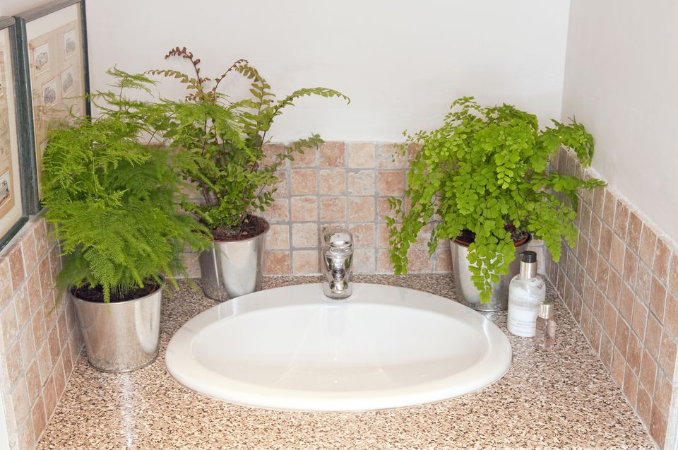 The best houseplants for your bathroom for Best plants for bathrooms