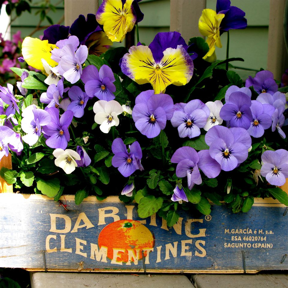 Cheap Gardening Ideas: 10 Container Garden Ideas That Are Cheap Or Free