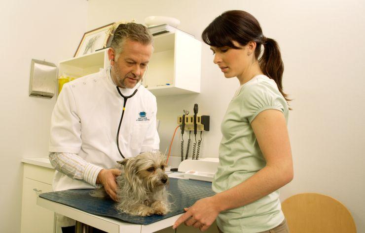 vet-dog-owner-DeanGolja-getty.jpg
