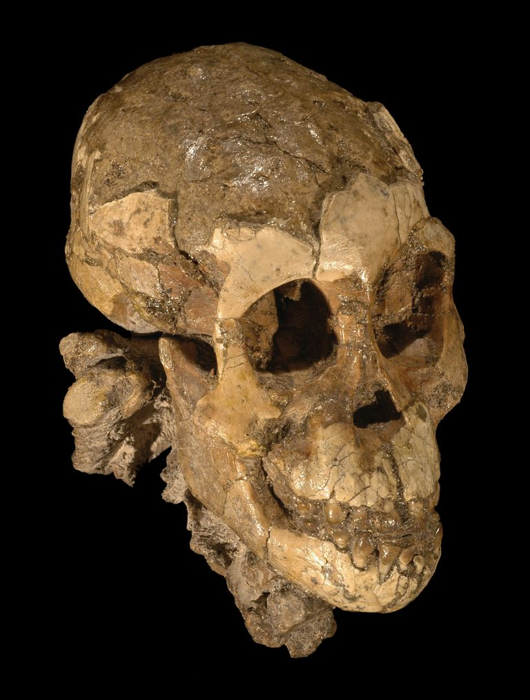 Dikika Infant - Australopithecus Child