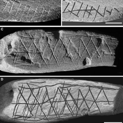 innovations of the upper paleolithic As you should know from your readings, the upper paleolithic was a period of incredible diversity and technological innovation lithic technology also underwent an important change during.