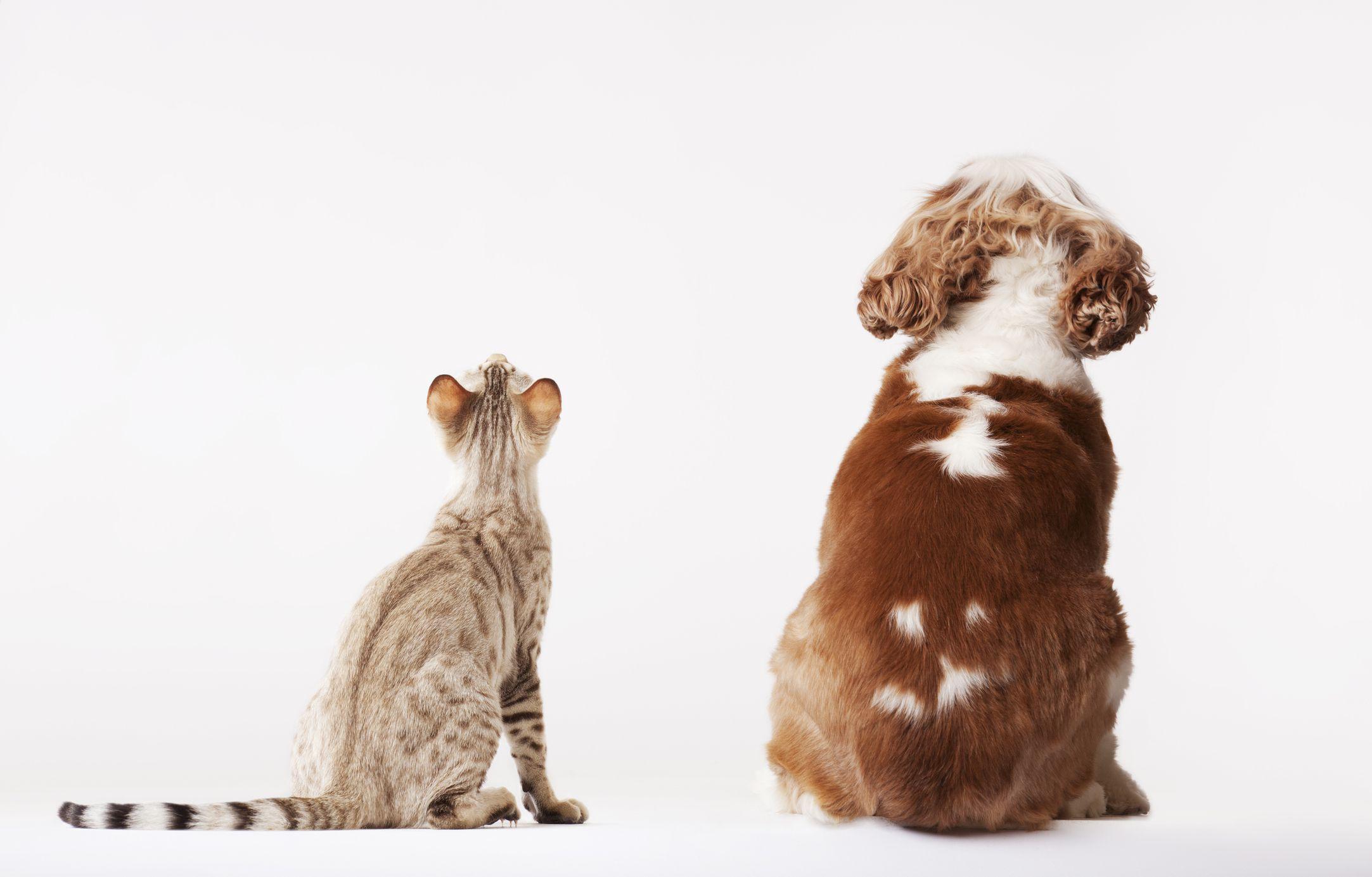 Ten Pet Insurance Questions When Buying Pet Insurance