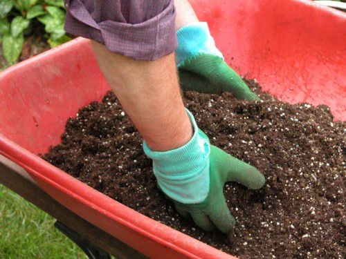 Mix the Fertilizer and Water into the Potting Mix