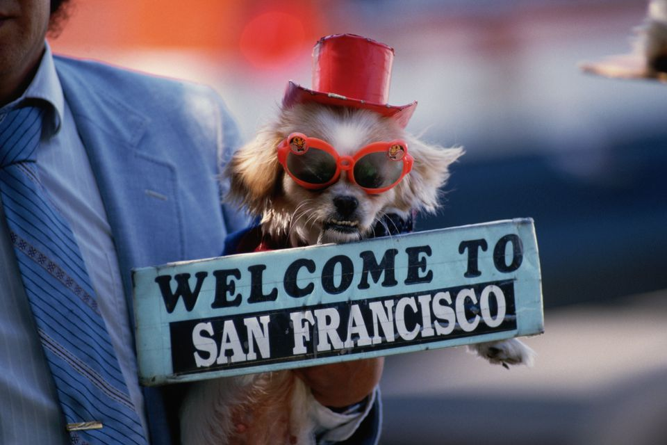 Street Performer Holding a Small Dog and a sign saying Welcome to San Francisco