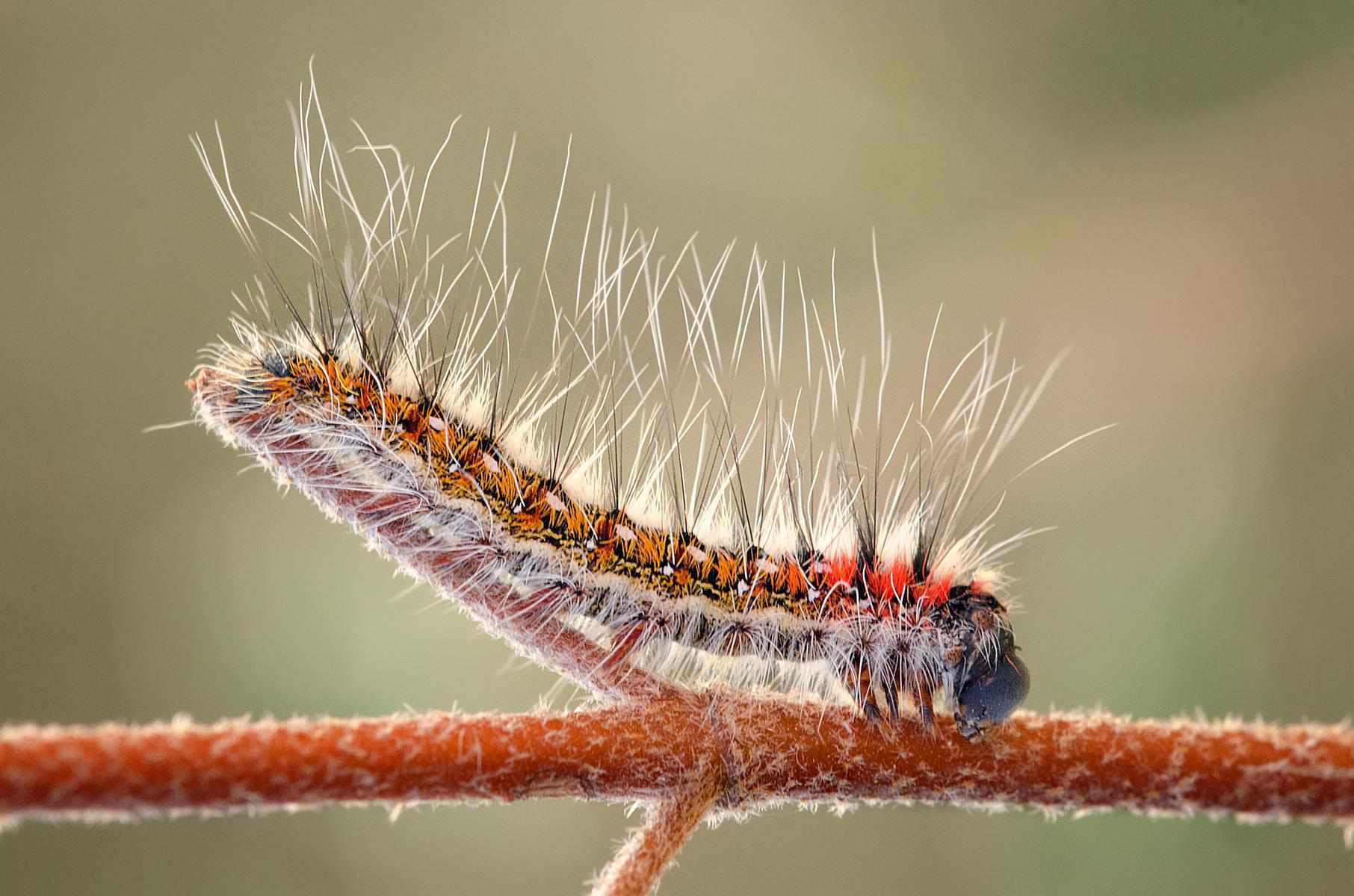 Insects and arachnids as spiritual totems buycottarizona Image collections