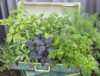 Container Vegetables Container vegetable gardening container vegetables workwithnaturefo