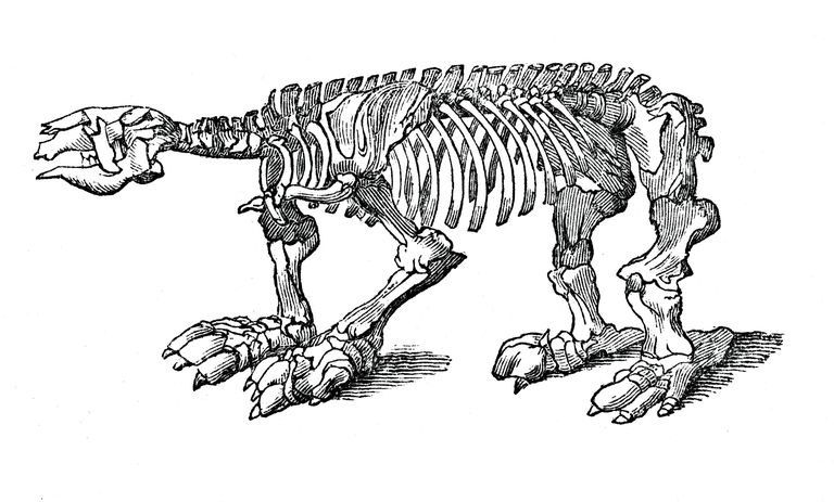 Skeleton of Megatherium, extinct giant ground sloth, 1833.Artist: Jackson