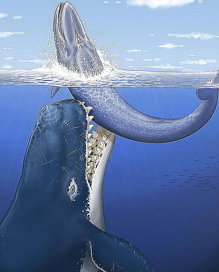 Facts About Leviathan, the Giant Prehistoric Whale
