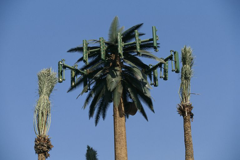 Cellular Antenna and Palm Trees