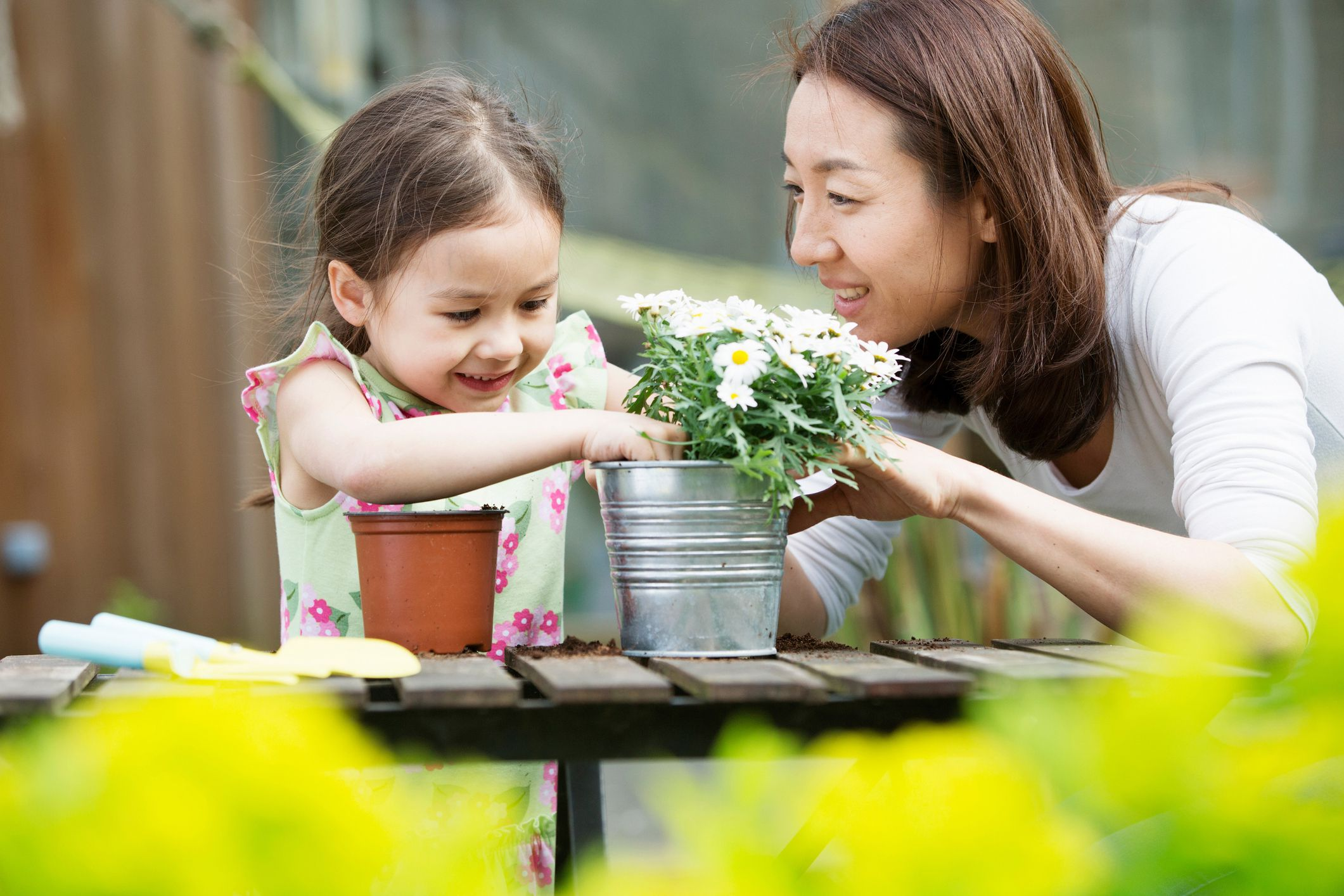 Steps for Repotting Your Houseplants