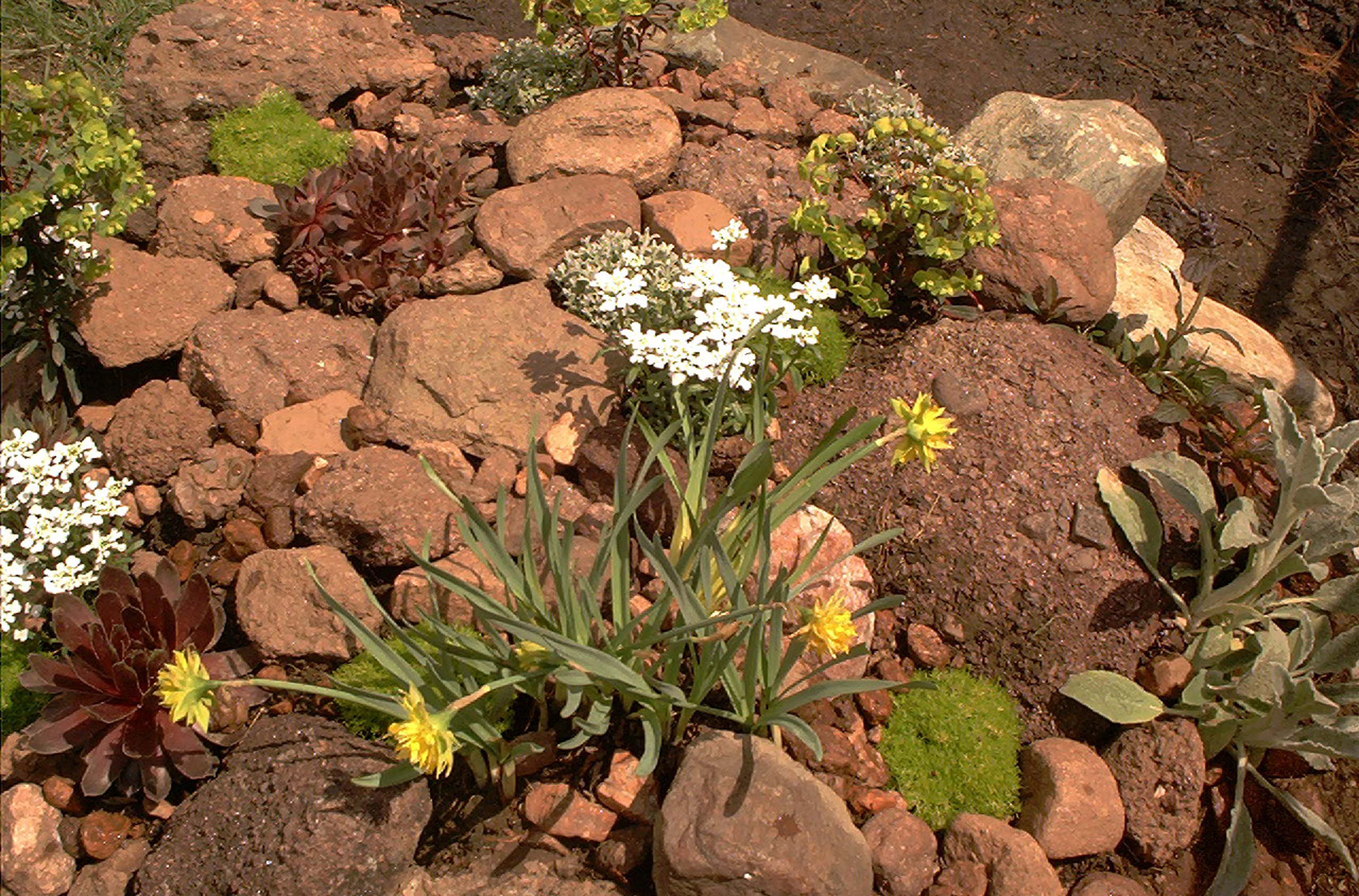 How To Build Rock Gardens For Small Spaces