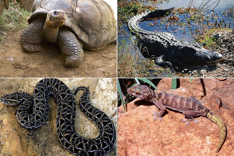 Collage of Reptile Photos
