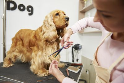Interview Questions To Ask A Dog Groomer