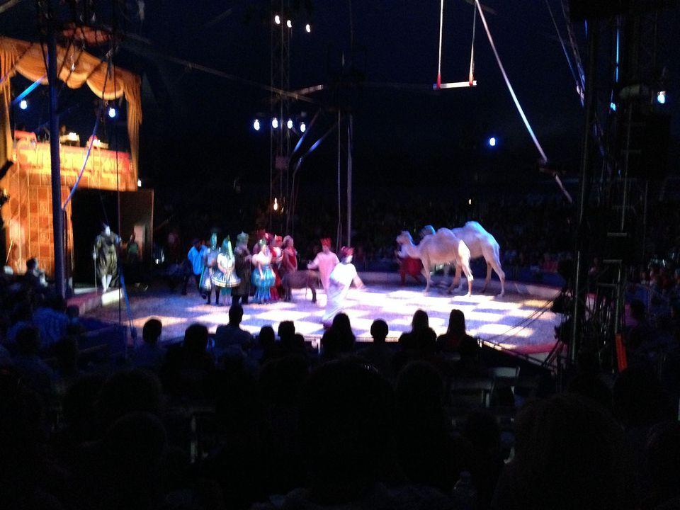 circus flora performance