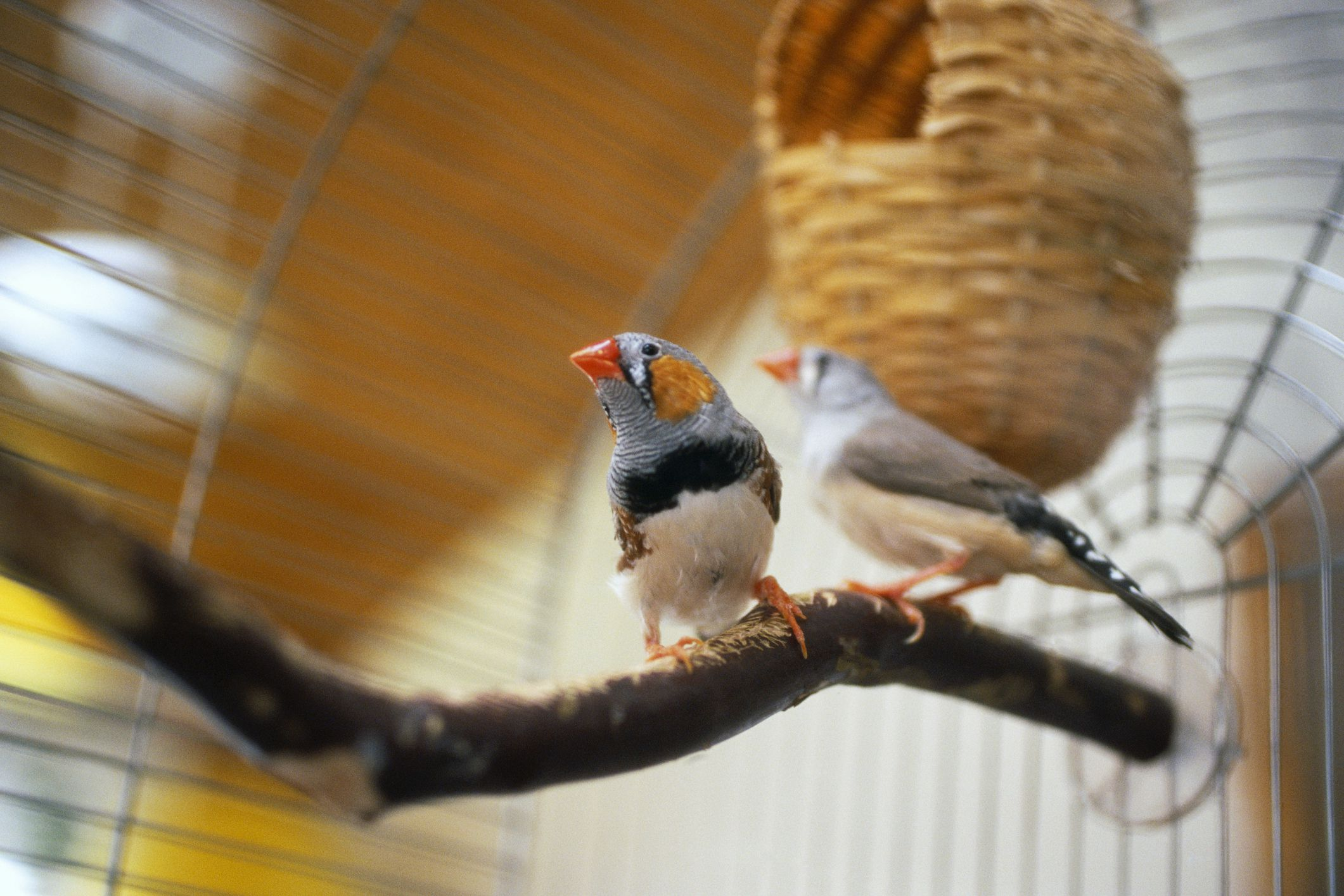 the best pet birds for apartment living