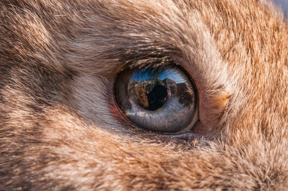 Rabbit eye close up