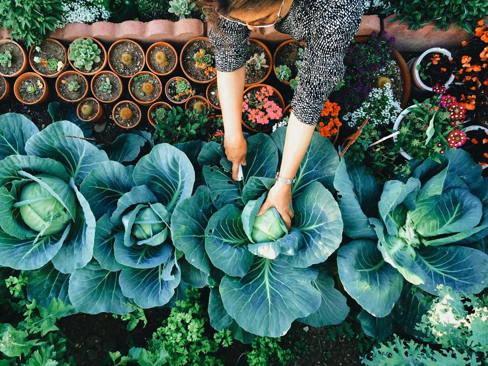 woman gardening and composting