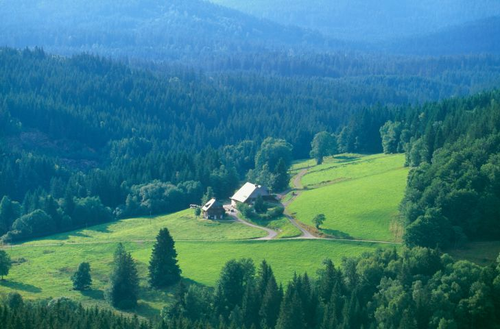 Black Forest - Photos Of The Black Forest In Germany-3845