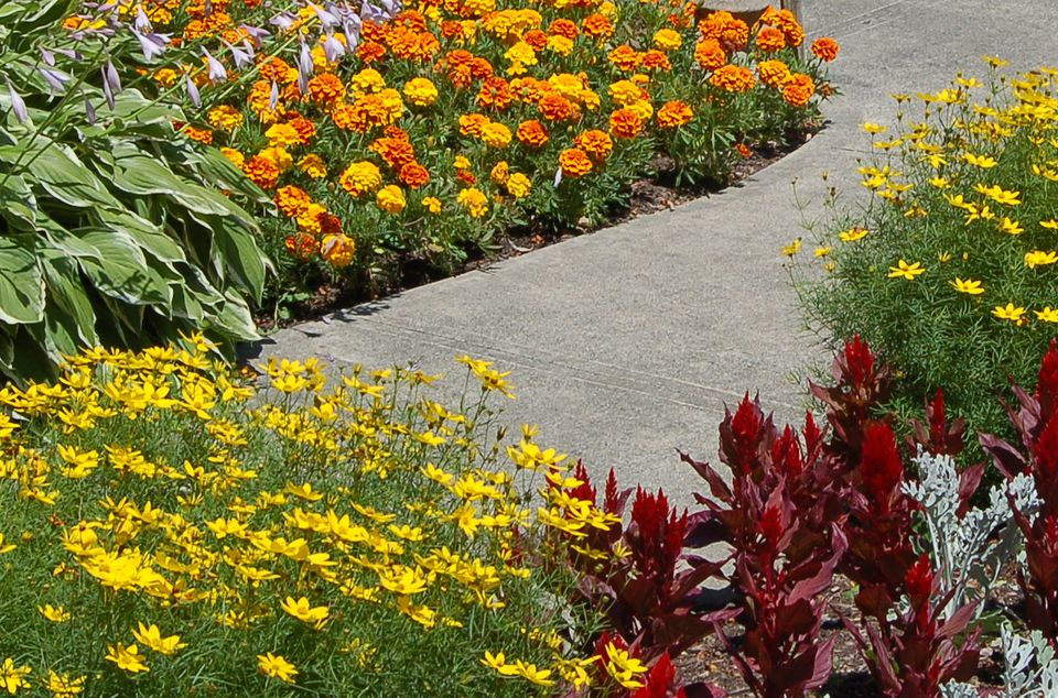 Edging plants what they are and how to use them for Low maintenance fall flowers