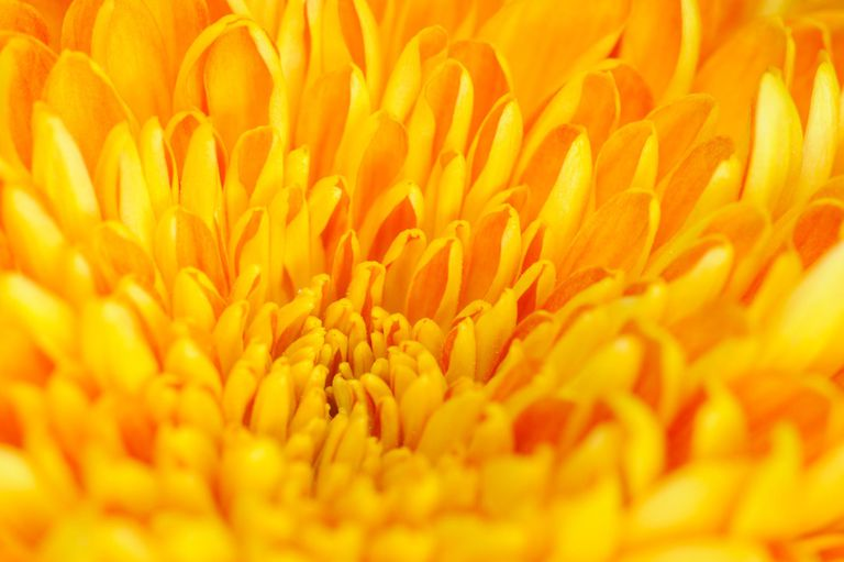 Yellow color psychology