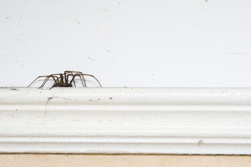 Spider On A Picture Rail