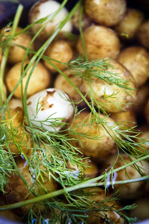 Fresh potatoes close-up.