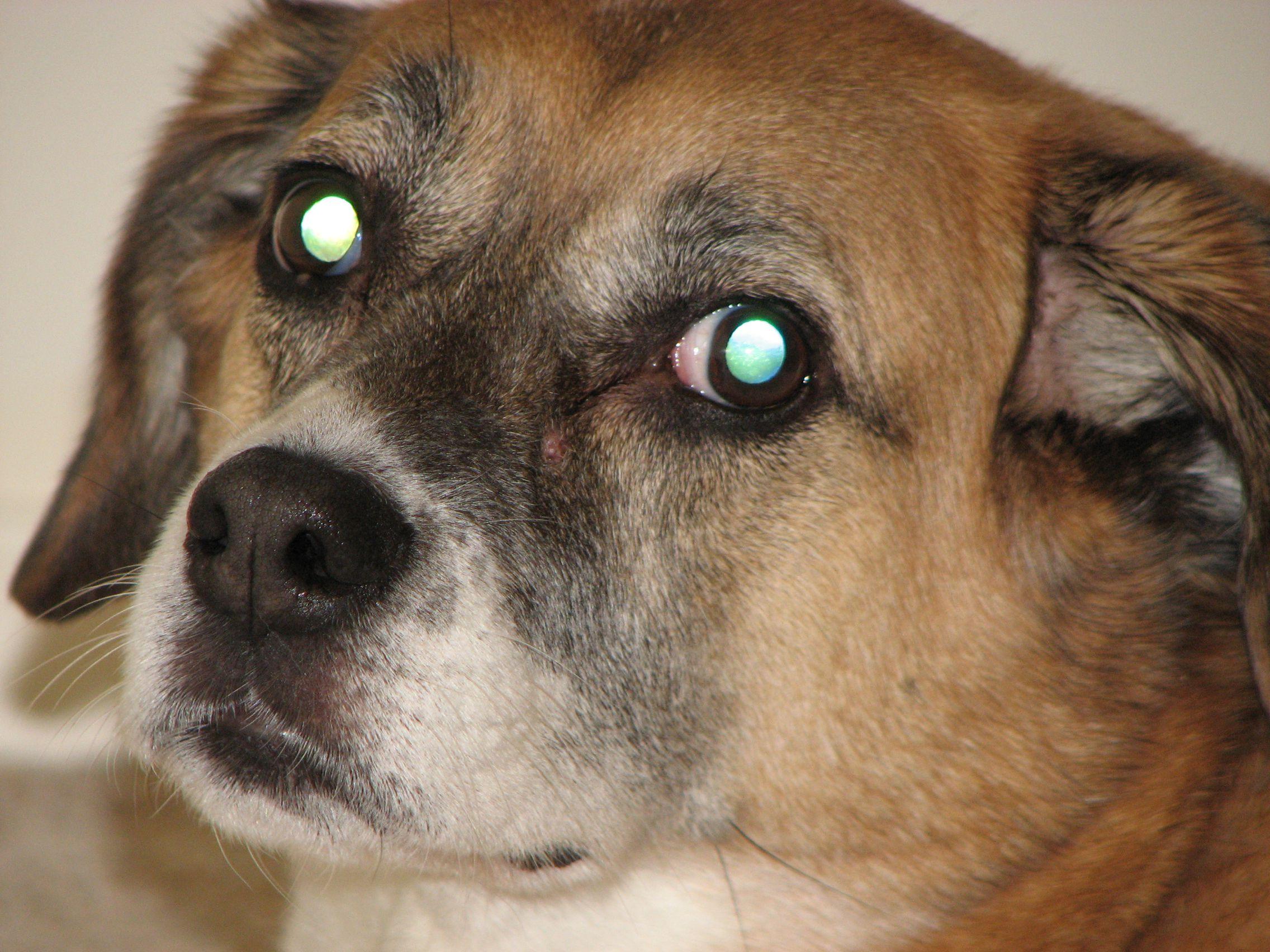 Sewing Dogs Eye