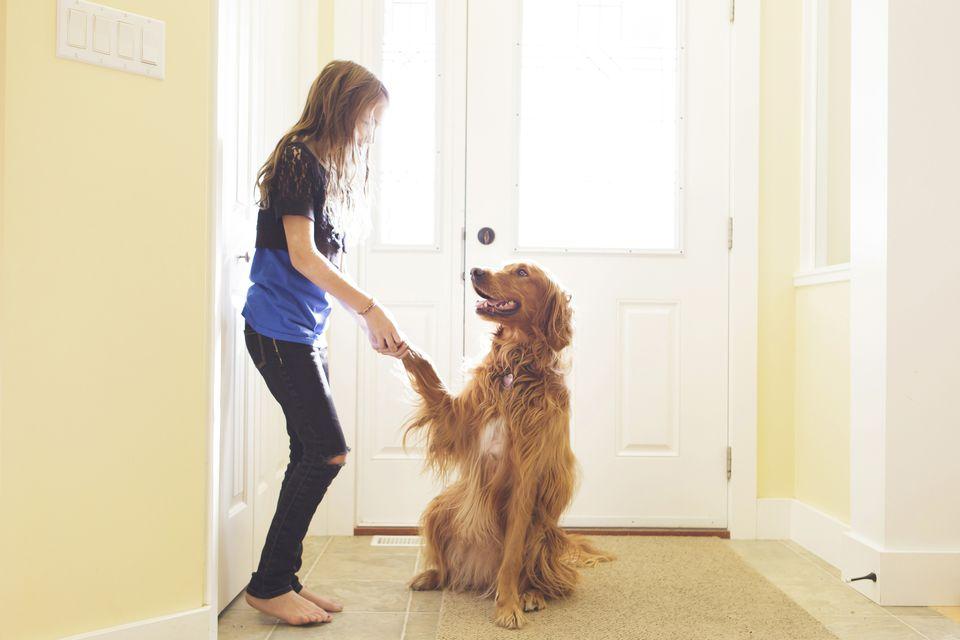 girl training dog to shake hands