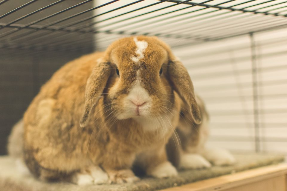 Close-Up Of Rabbit In A Cage