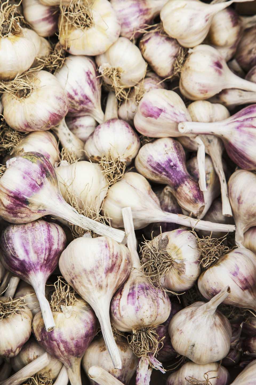 A pile of purple hardneck garlic
