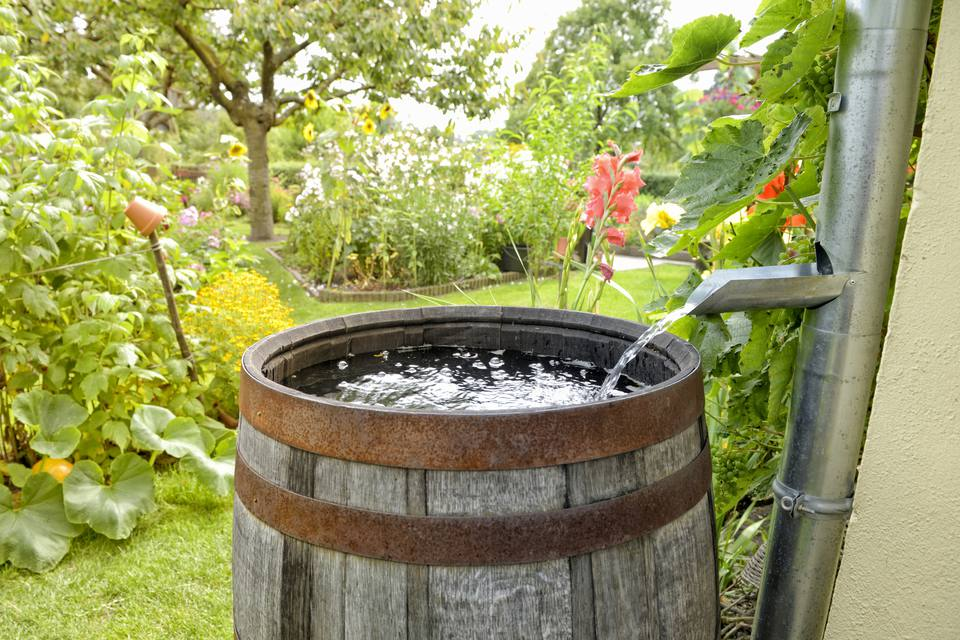rain barrel collecting water
