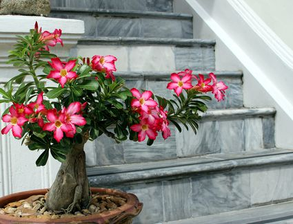 Best houseplants for sunny windows uncommon and unusual houseplants anyone can grow mightylinksfo Image collections