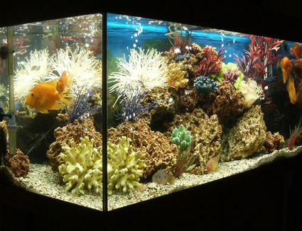 A Guide To Everything About Aquarium Heaters
