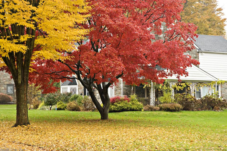Front lawn fall foliage