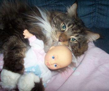Will My Older Cat Accept A Kitten