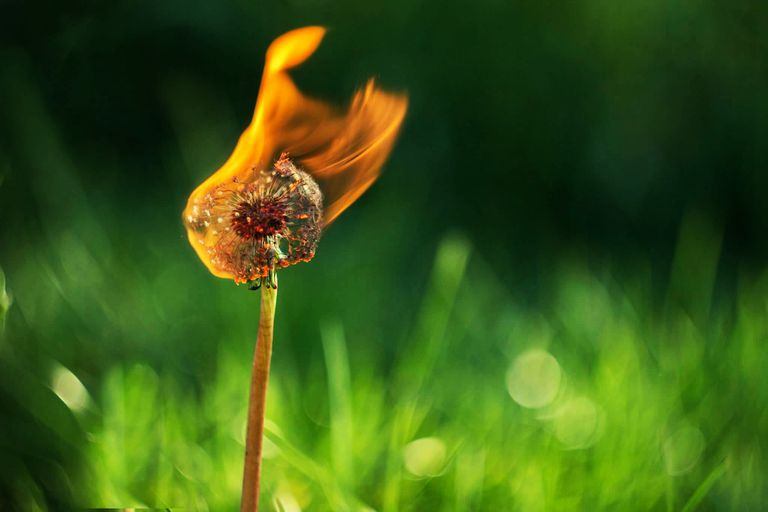 Unless you're using special filters, you won't see a rainbow of colors burning a dandelion.