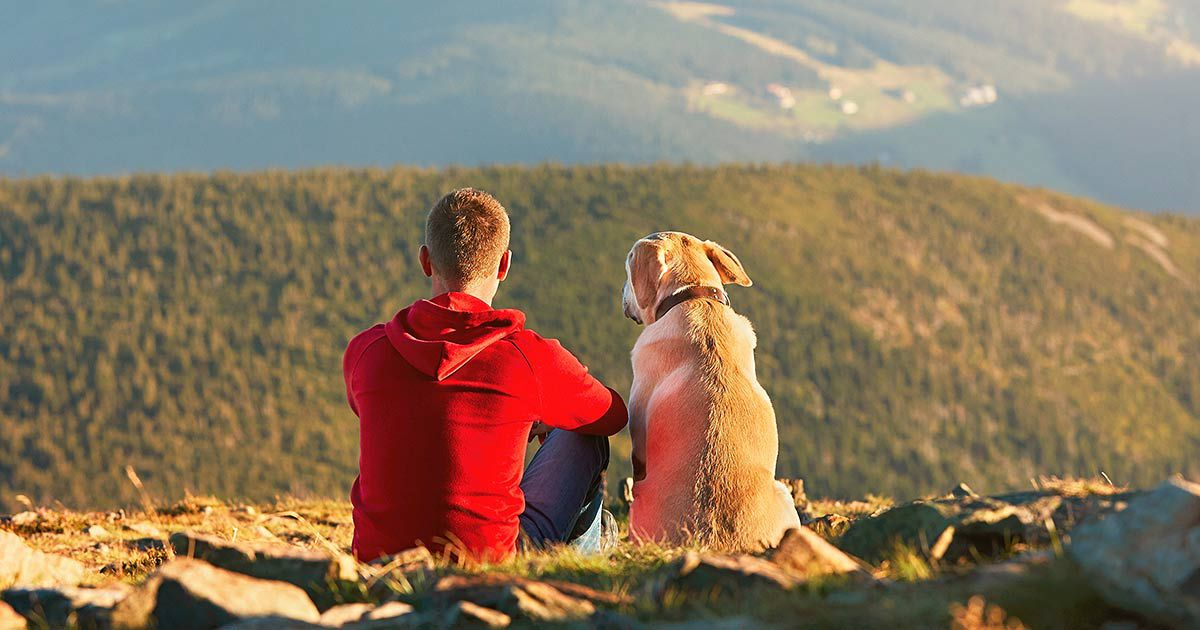 The Best National Parks to Visit With Your Dog