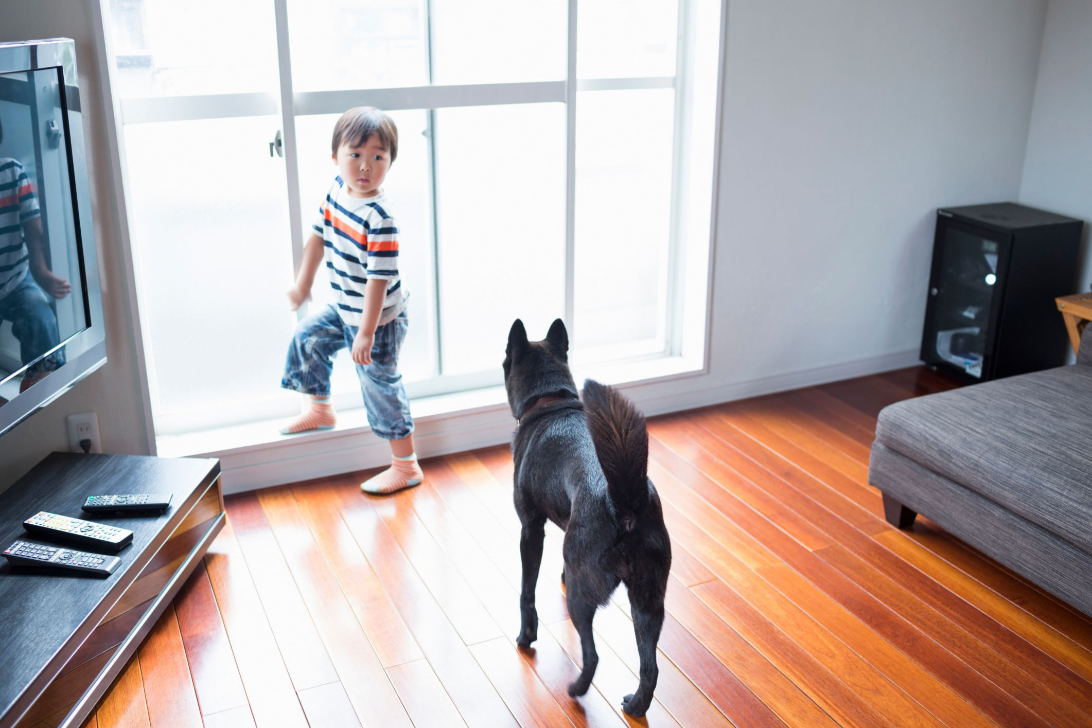 The 3 Best Wood Flooring Options for Homes With Dogs