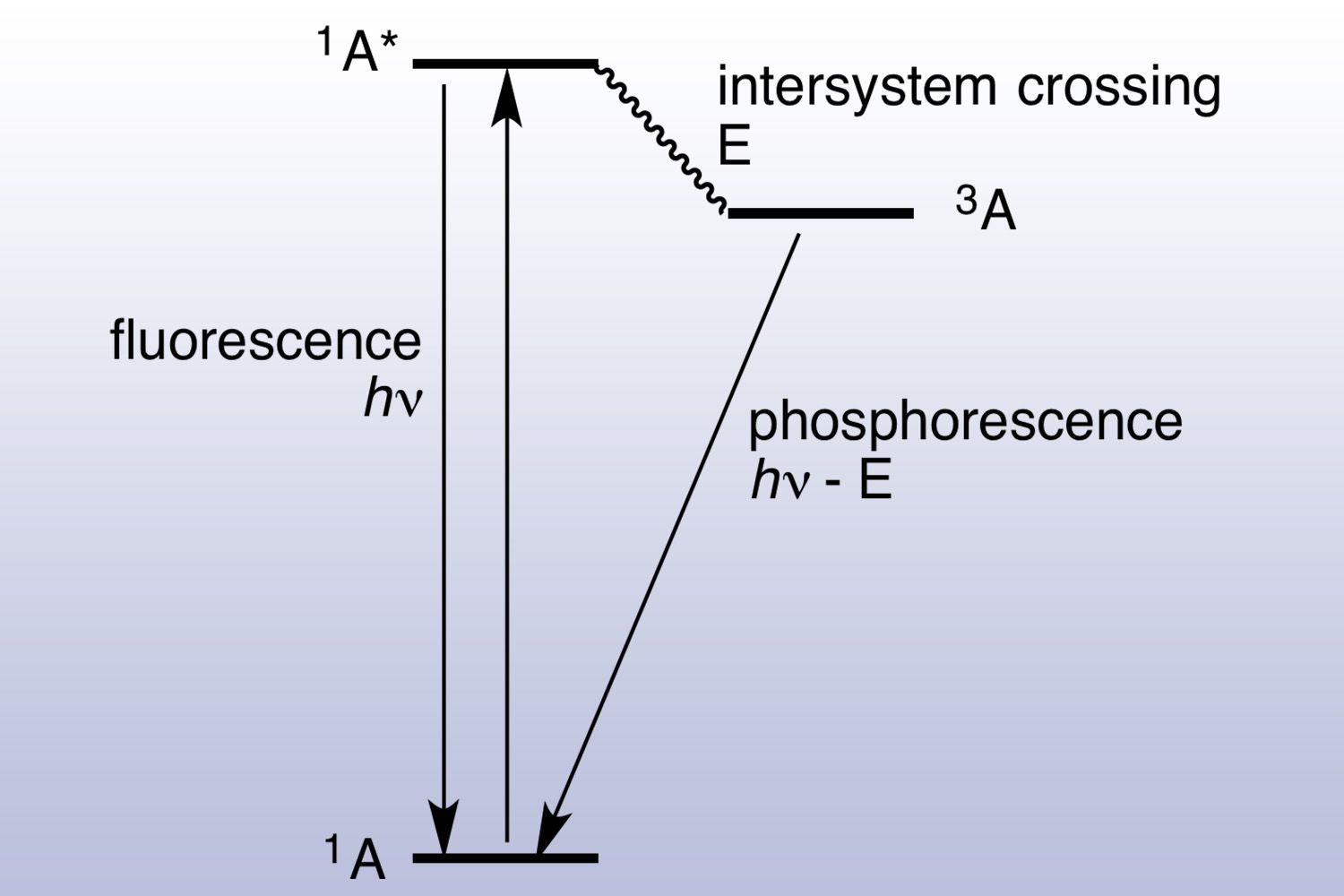Jablonski diagram showing difference between fluorescence and phosphorescence