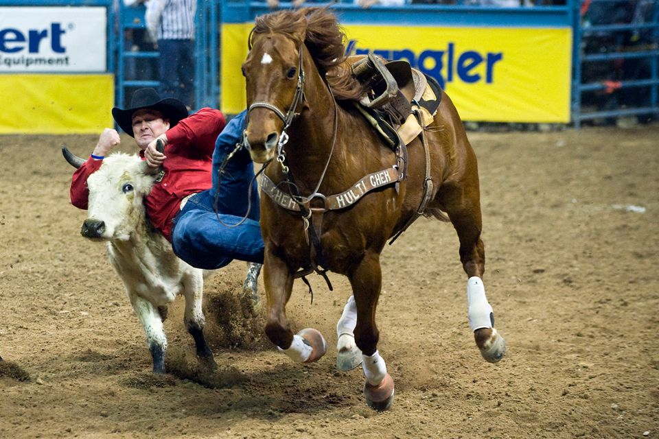 cowboy at national finals rodeo