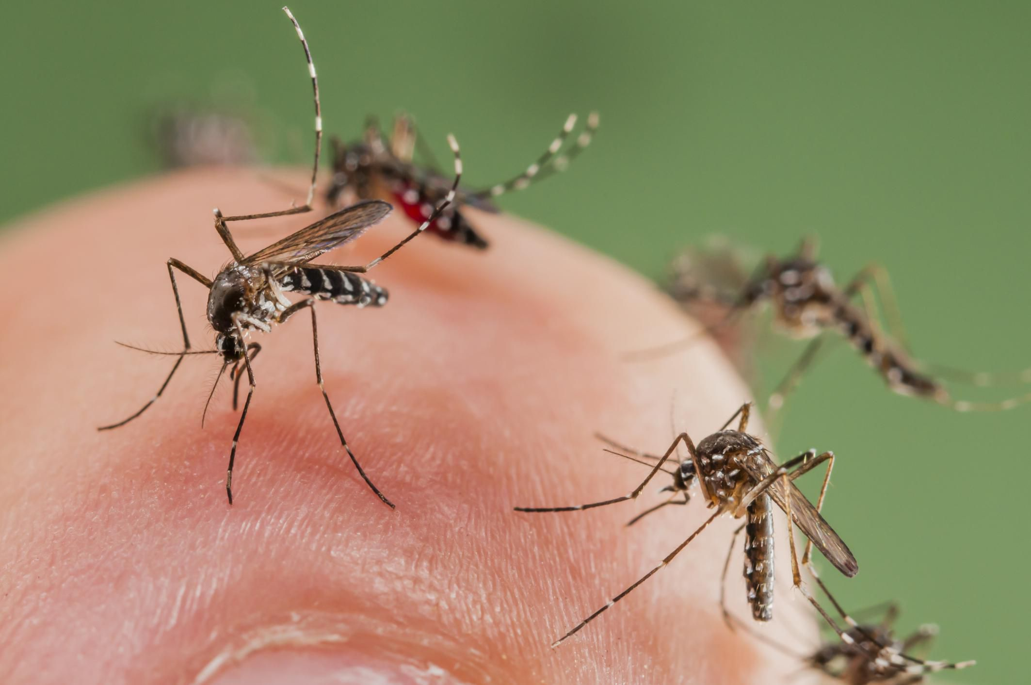natural mosquito control through smart landscaping