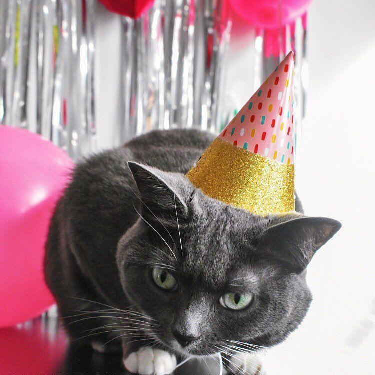 7 Fun Ways To Celebrate Your Cat's Birthday