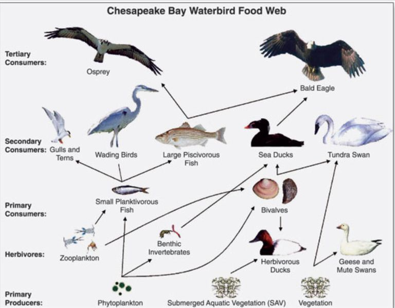 Example of a food web
