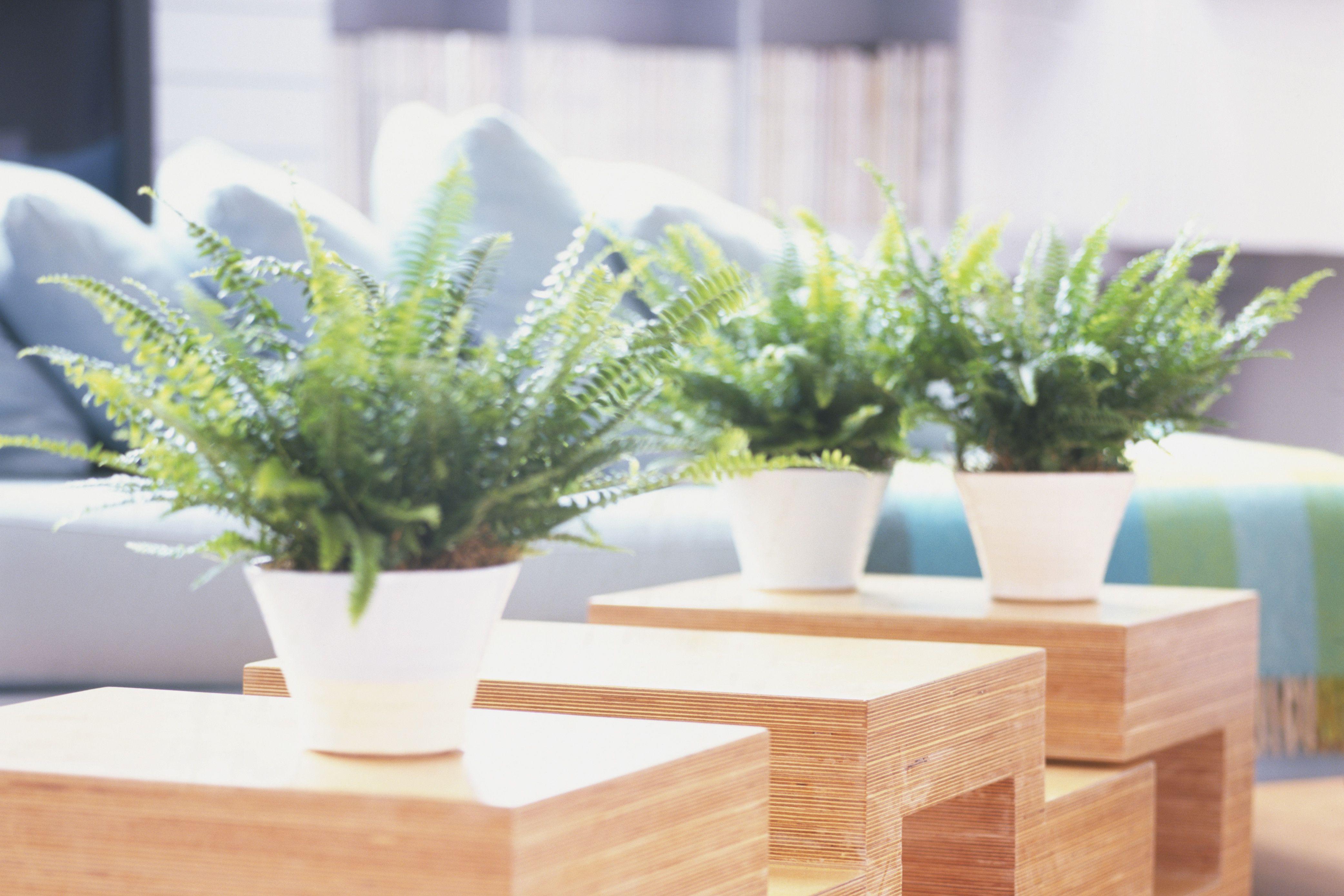 Top 10 Houseplants That Clean Indoor Air
