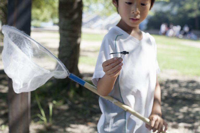 Boy with a butterfly net.