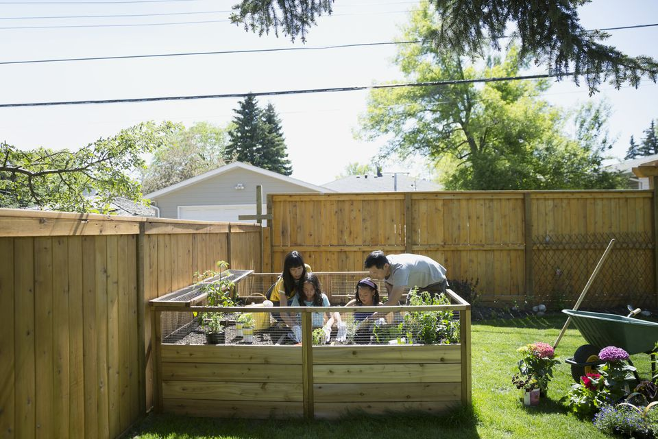 Family using raised garden bed