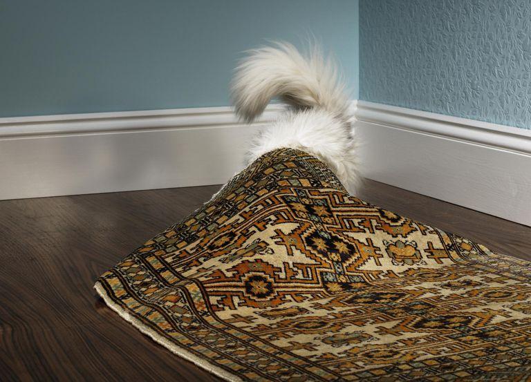 Cat hiding under carpet