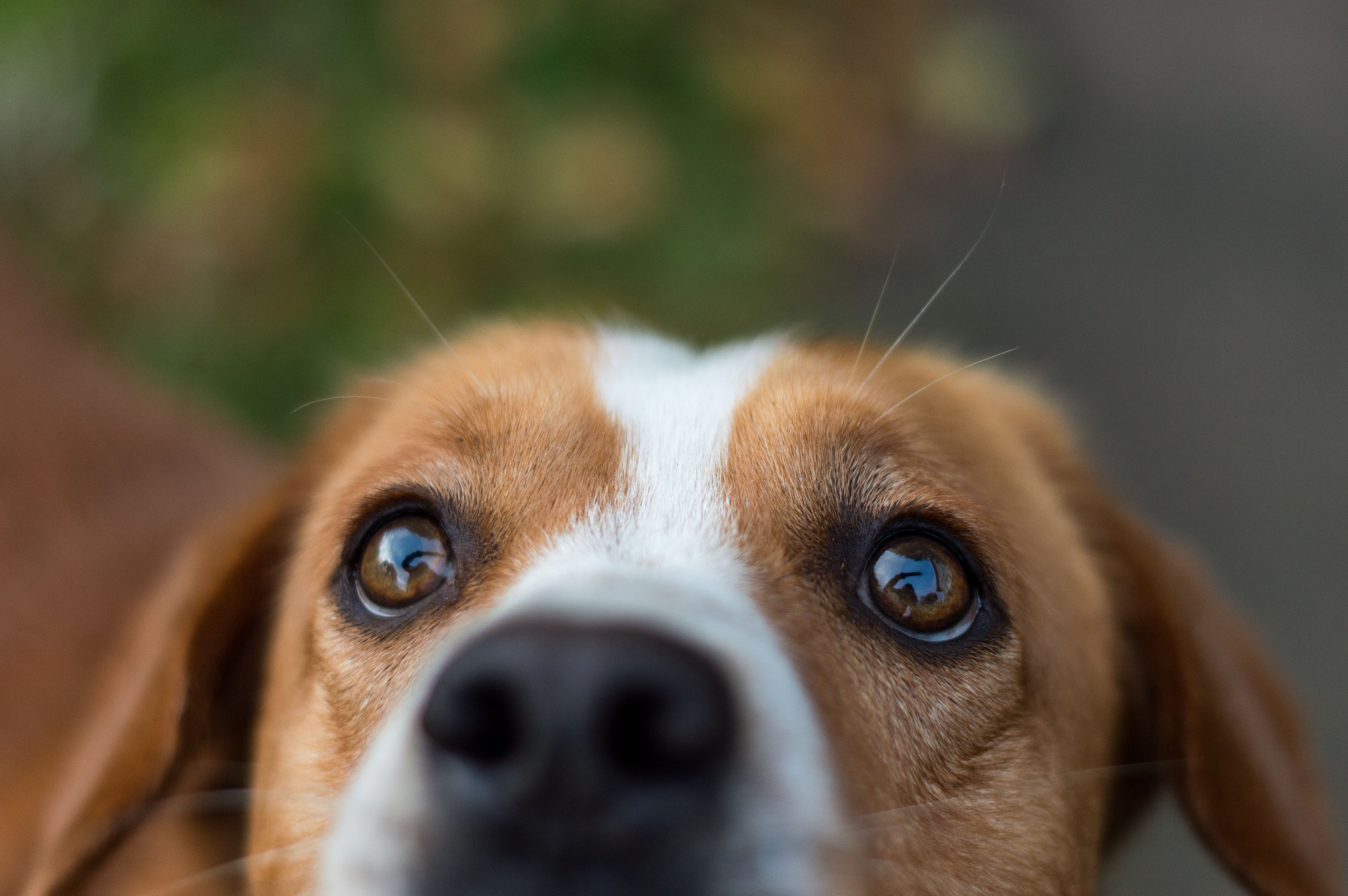 Canine Hot Spots Signs Causes Treatment