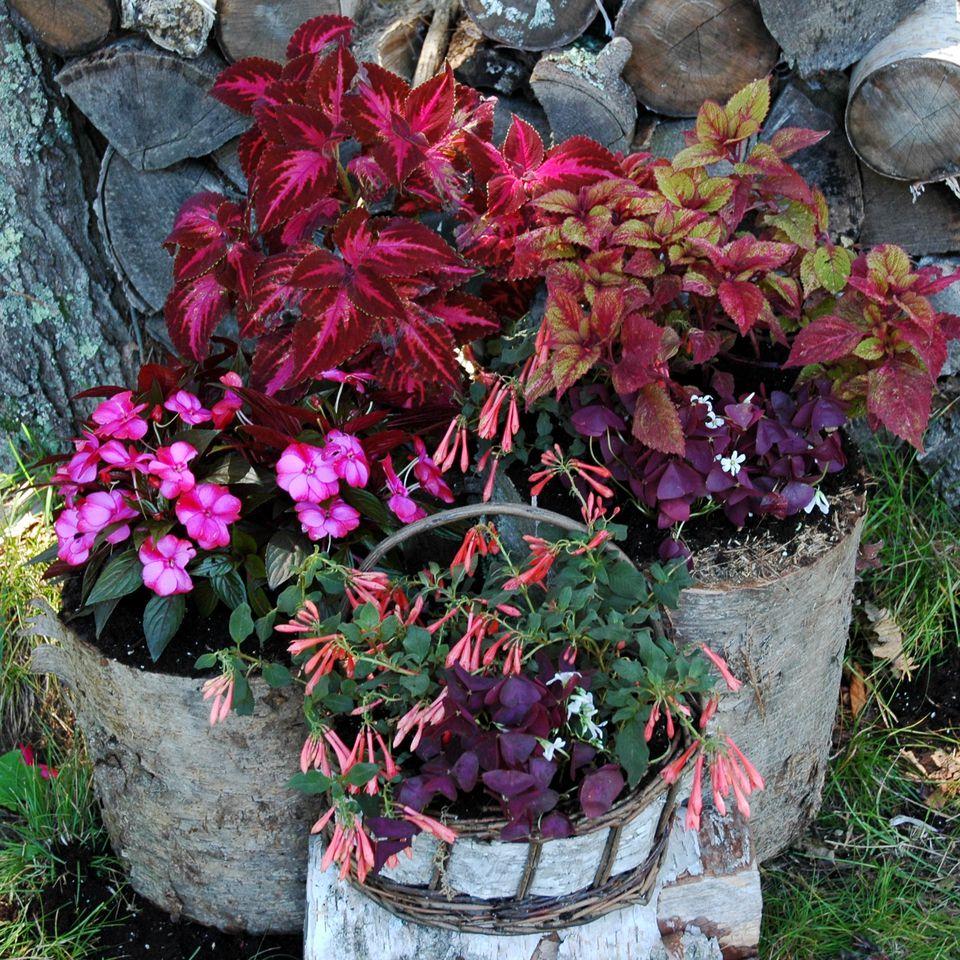 19 Fall Container Garden Ideas