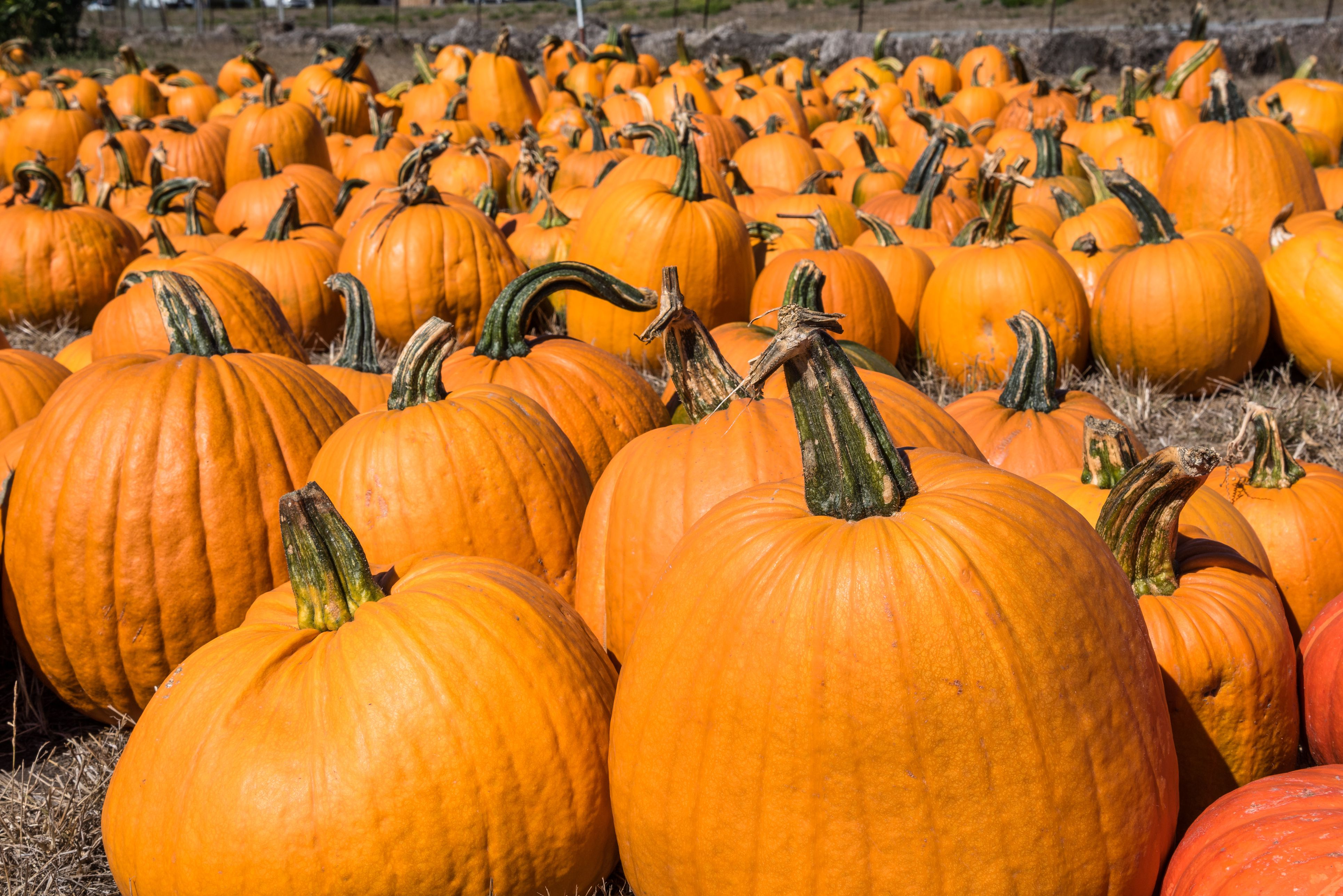special october days and observances